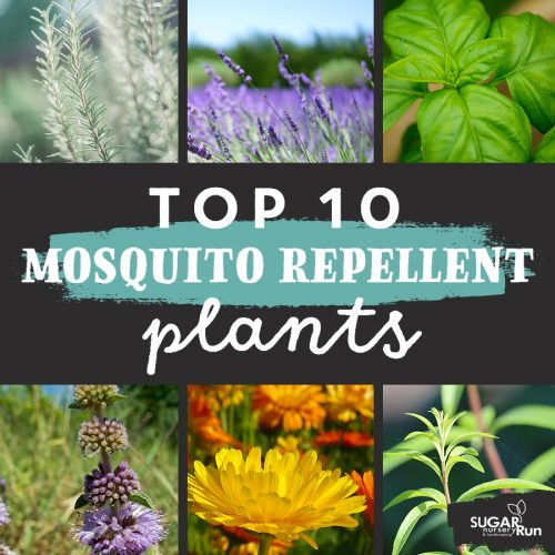 TOP 10 MOSQUITO REPELLENTS